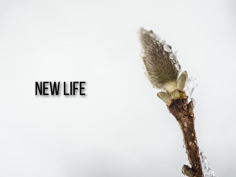 new-life-001-001